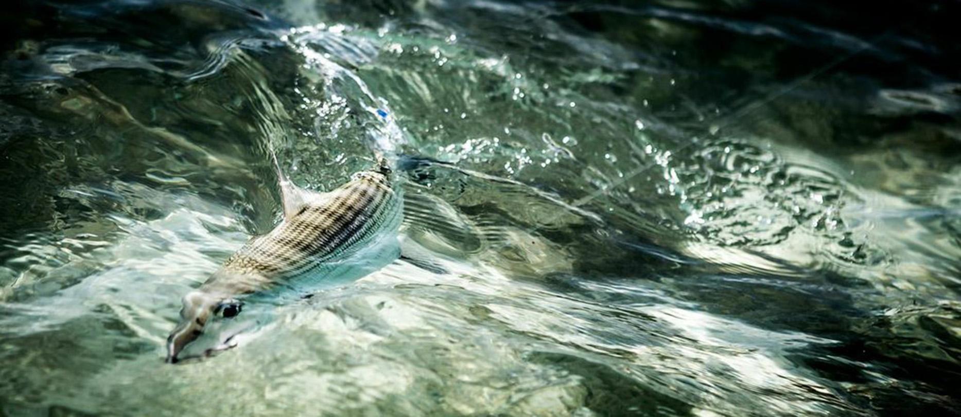 Travel Fishing Lodge Fly Fishing Bonefish Tarpon Salt Flats Permit Jacks Venezuela Los Roques Fly Fishing Trips