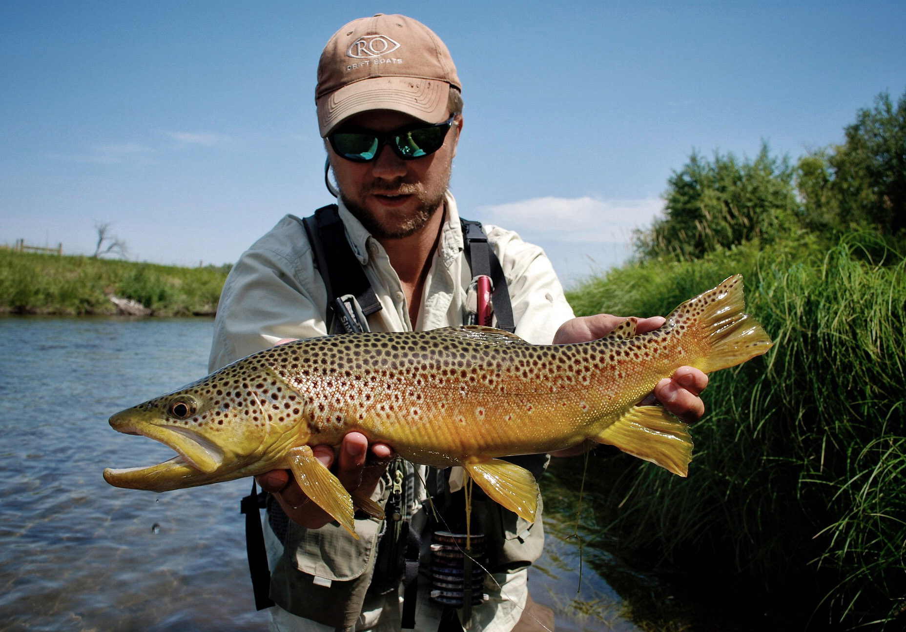 Brown Trout Dry Fly Fish Private Water Hopper Eat Fly-fishing