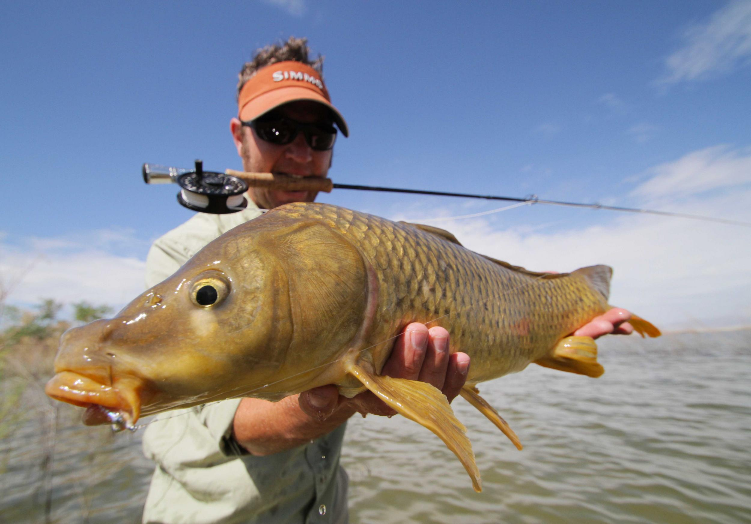 Carp on the Fly Fishing Guide Trip