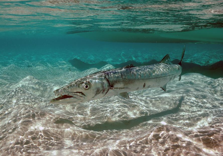 Bahamas fishing guides