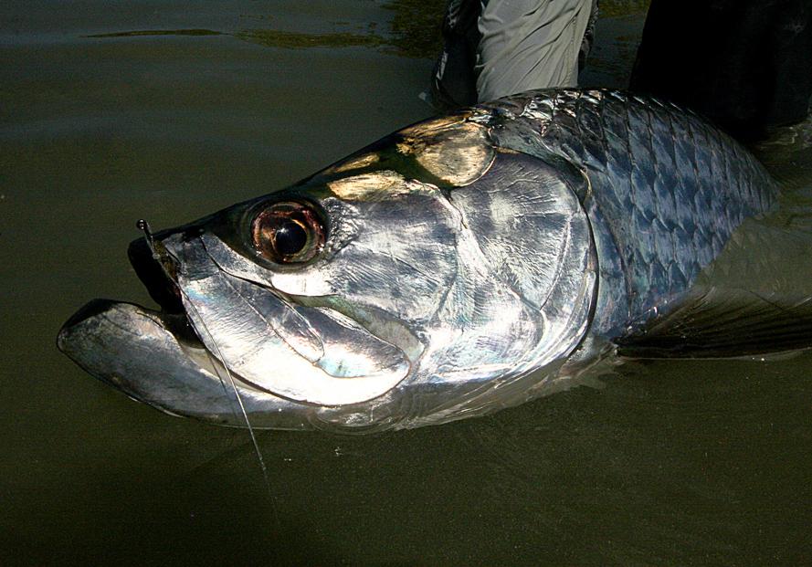 Bahamas fishing trips