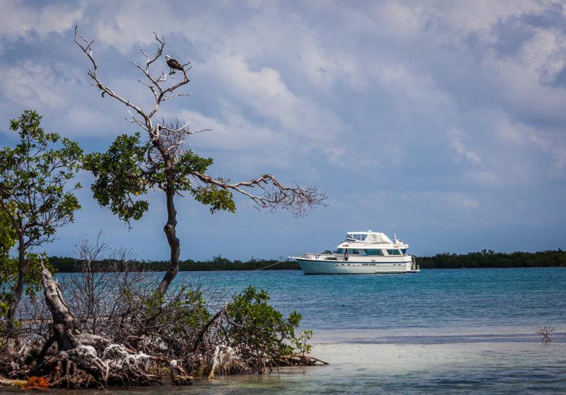 The Rising Tide Belize