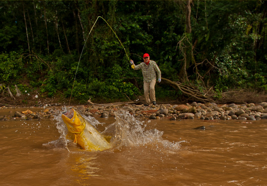 Pluma Lodge Bolivia Fly Fishing Tsimane Golden Dorado