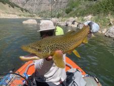 One of the amazing fish in Wind River Canyon!